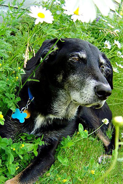 Black dog sitting in grass, Crowsnest Pass pet photography