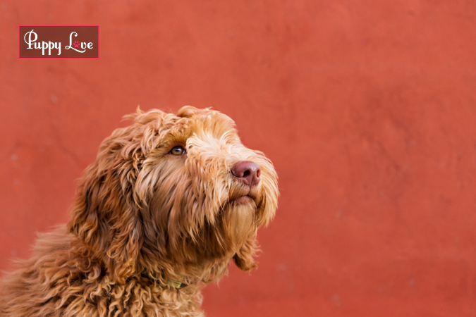 Cute Lethbridge Dog Photography on red wall