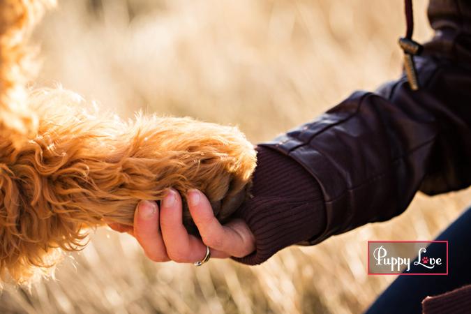 Emotional photo of owner holding dog paw Lethbridge