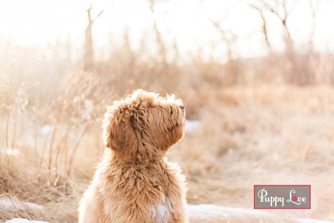 Soft timeless dog photo in Indian Battle Park Lethbridge