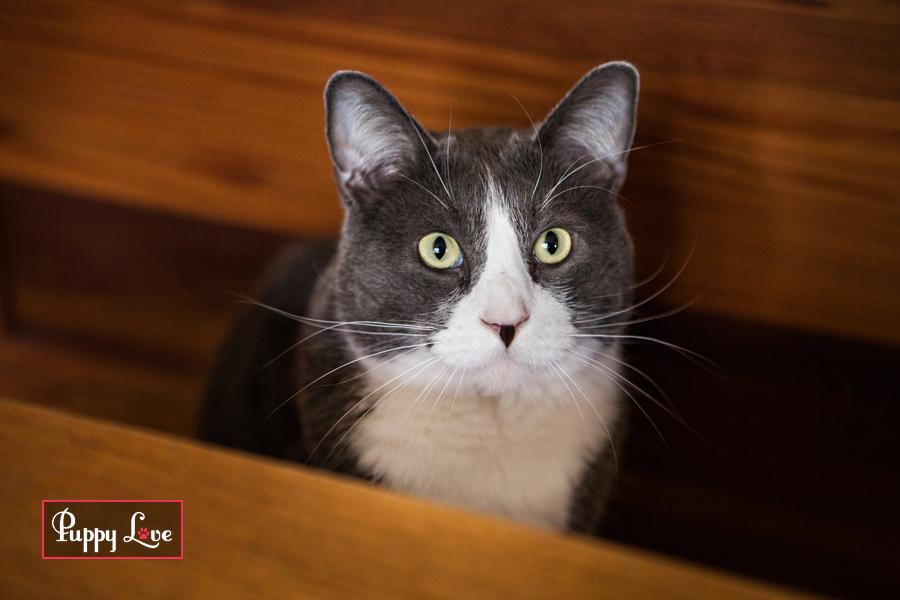 PAW Society Calendar Cats