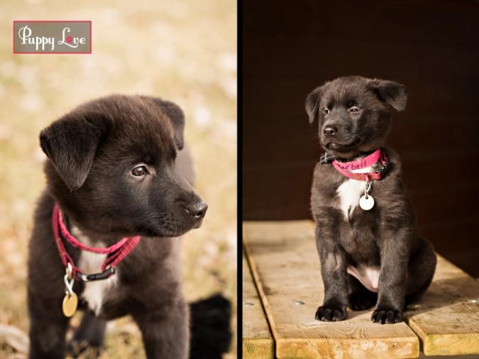 Cute dog Lethbridge pet photography