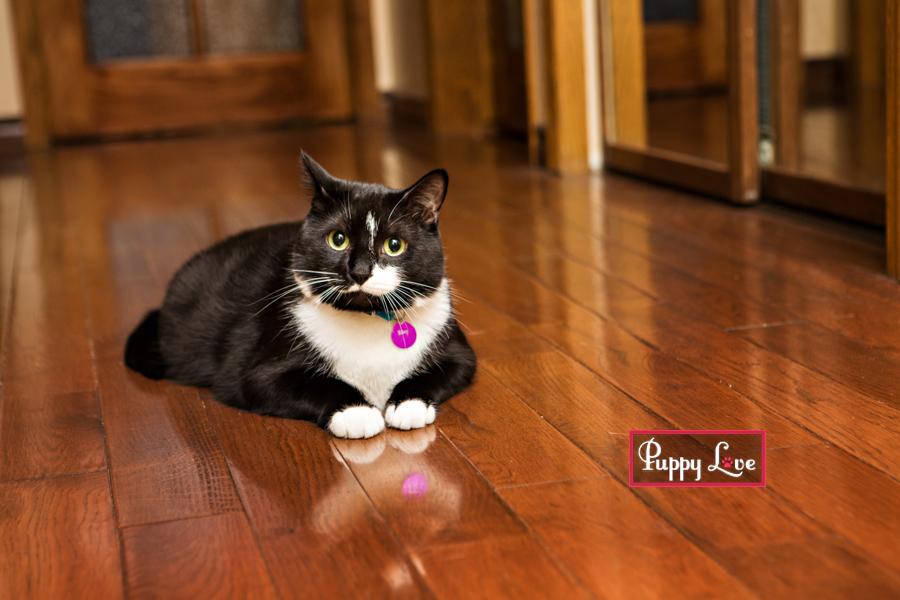 Fun Lethbridge pet photography of black and white cat