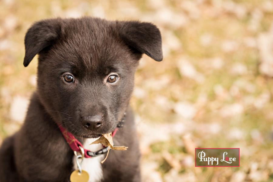 Adorable Lethbridge rescue puppy eating leaf