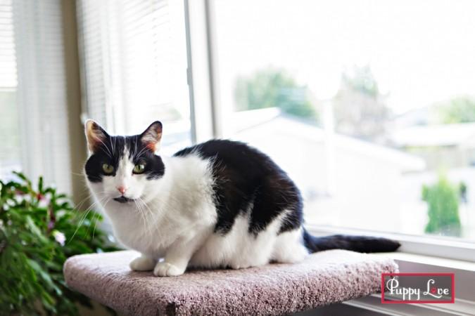 PAW Lethbridge rescue cat