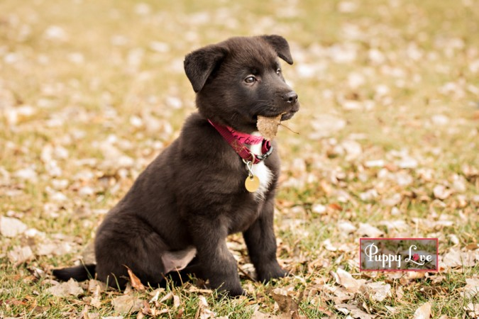 AARCS rescue puppy pet photography