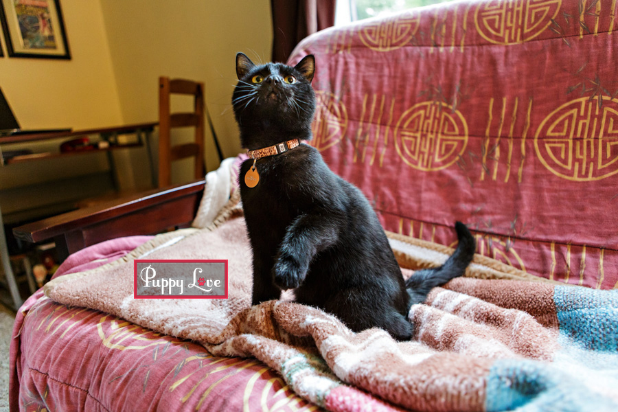 Fun Lethbridge pet photography of black cat