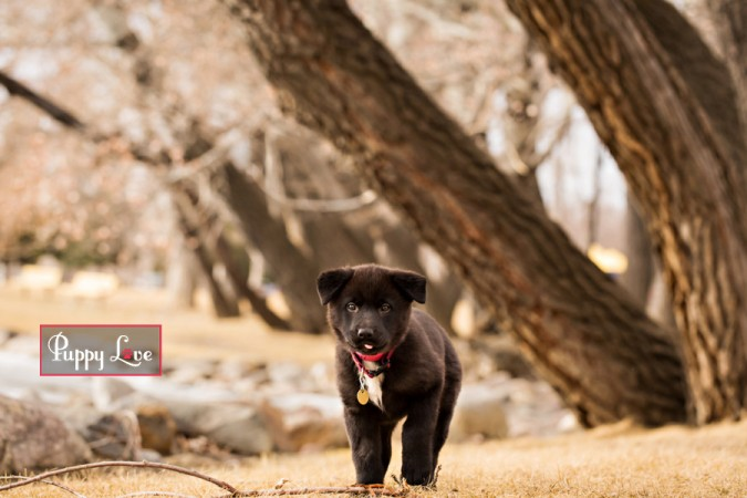 Fun Lethbridge pet photography of puppy sticking out tongue
