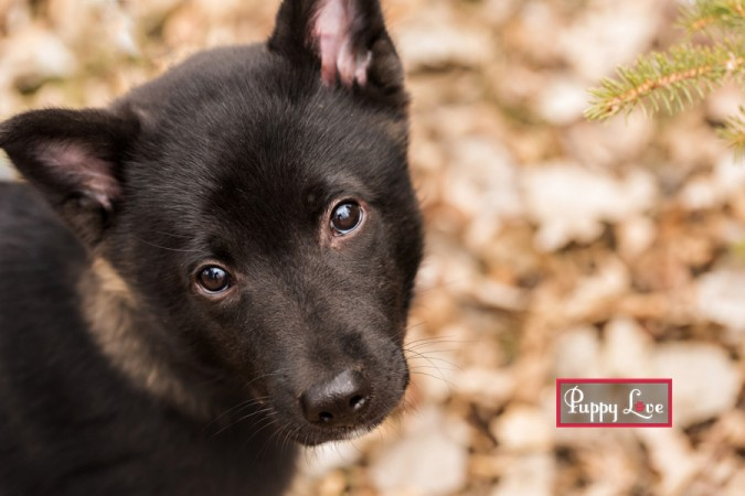 Fun Lethbridge pet photography of puppy