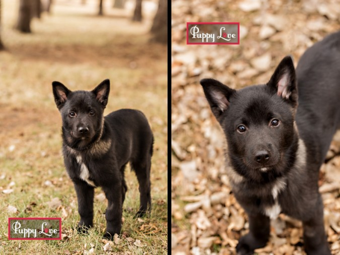 Cute puppy from AARCS for rescue