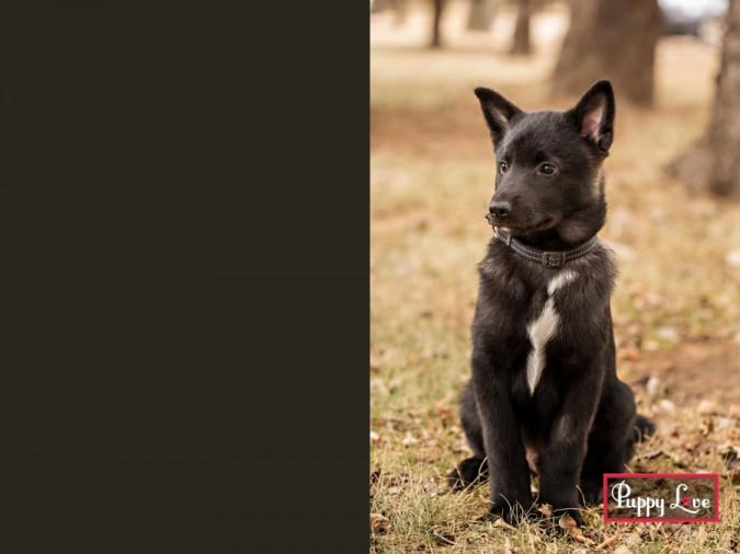 Young black dog in Lethbridge