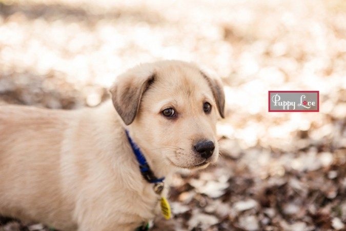 Henderson Lake Puppy photography