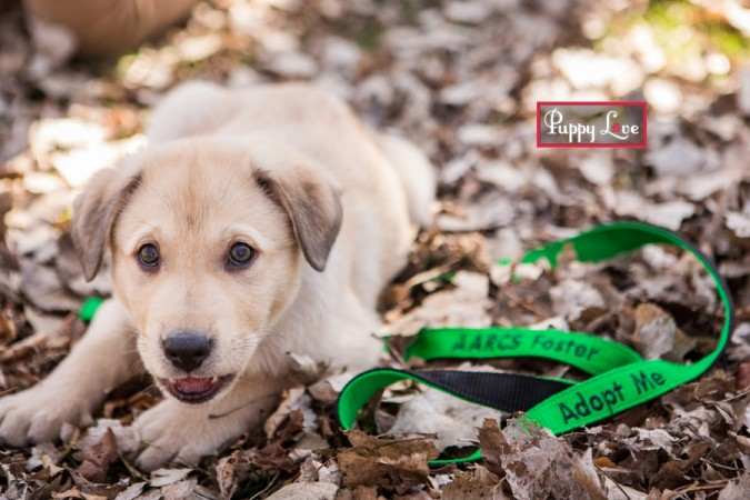 AARCS rescue dog photography