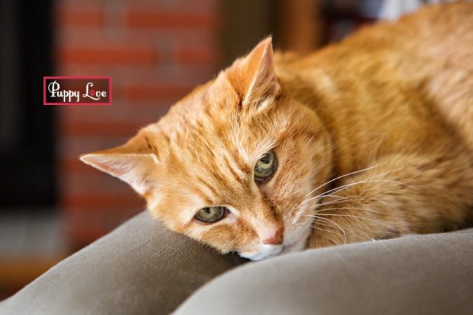 Lethbridge pet cat photography