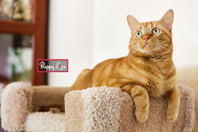 PAW Lethbridge rescue cat photos