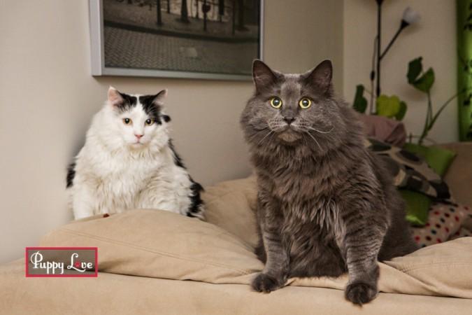 Lethbridge PAW society calendar cats