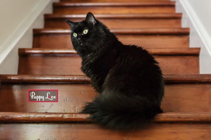 Lethbridge rescue cat photography