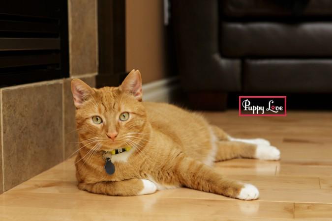 Lethbridge cat rescue photography