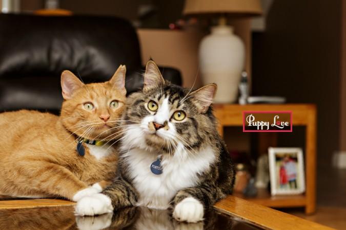 fun Lethbridge pet photography