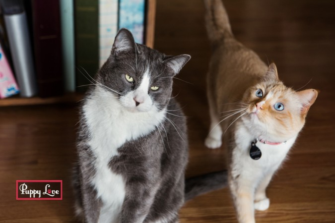 Lethbridge cat pet photography