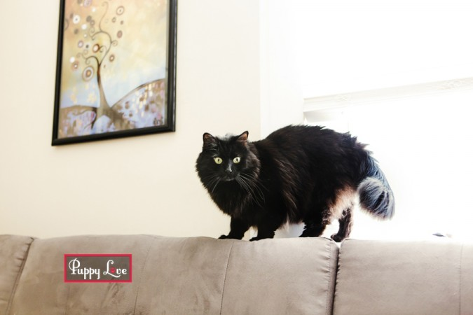 Beautiful black cat, Lethbridge pet photography