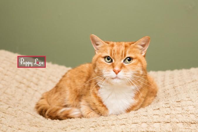 Lethbridge cat rescue photos