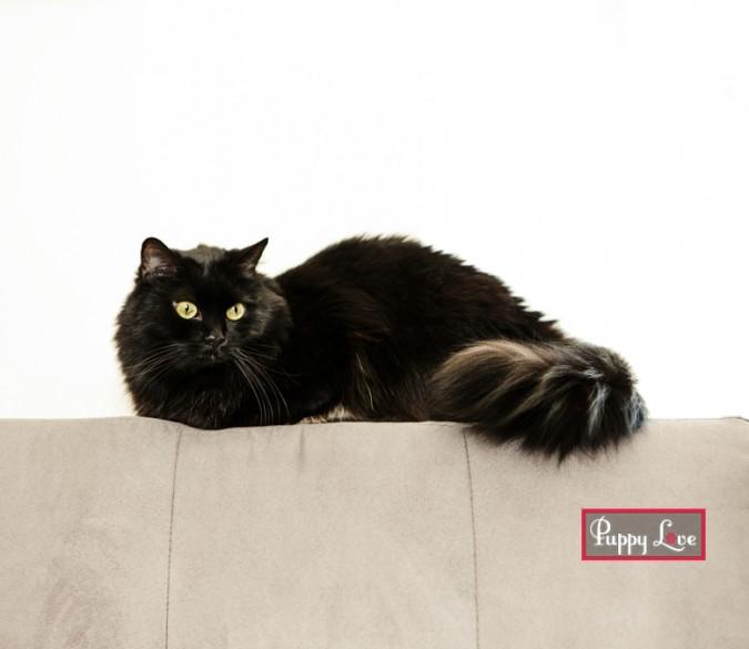 Lethbridge PAW society calendar cat