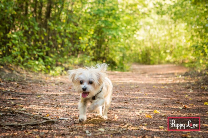 Little happy dog running in Pavan Park Lethbridge