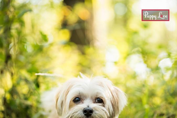 Cute dog face in Pavan Park