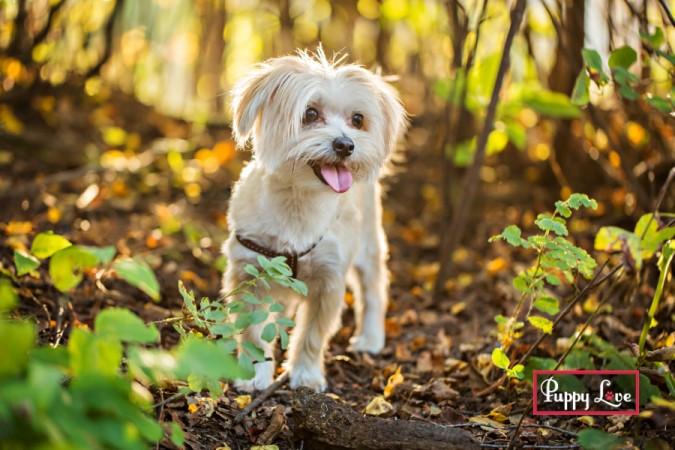 Happy smiling dog, outdoor Lethbridge dog photos