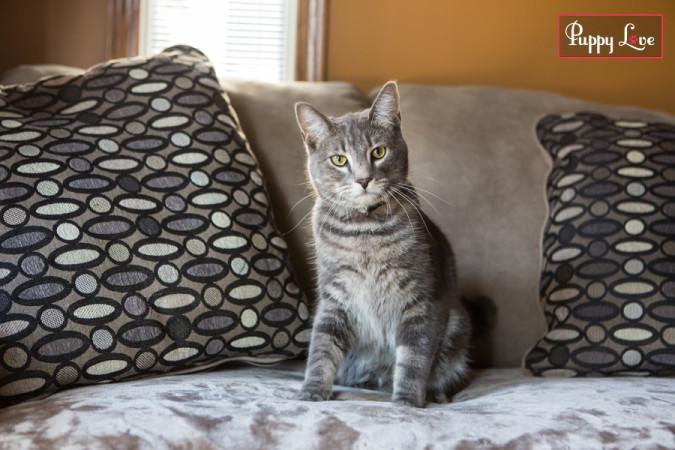 Lethbridge PAW Society cat