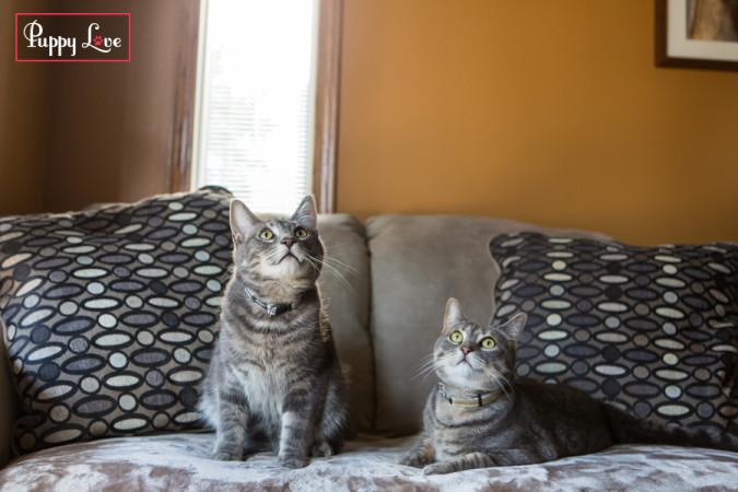 PAW Society cat calendar fun photos