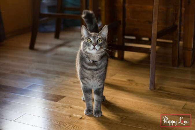 Lethbridge PAW cat of the month