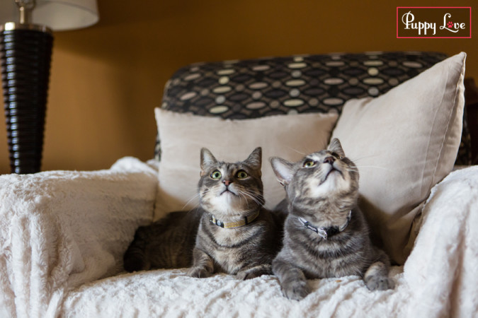 PAW Society cats cuddling