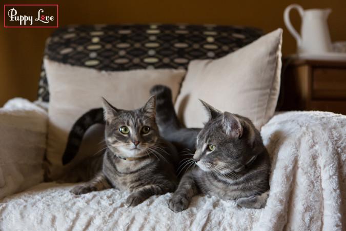 PAW Calendar cats snuggle