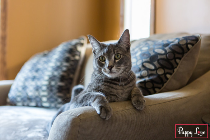 Lethbridge PAW society cat calendar photos