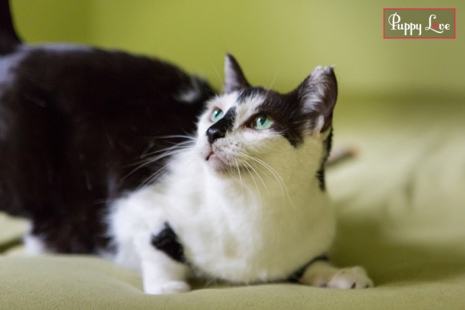 PAW Society Cat Audrey