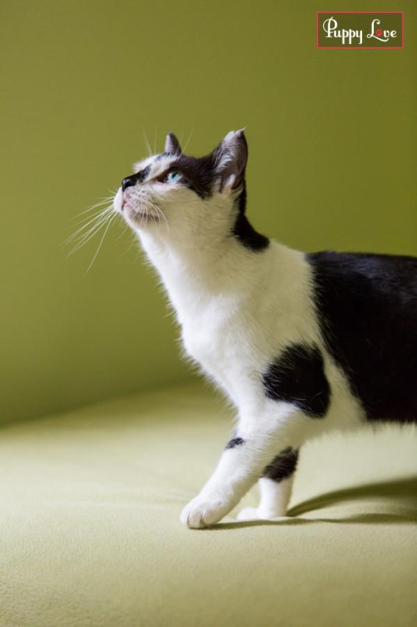 PAW cat calendar fun photos