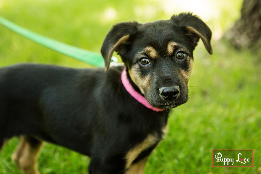 AARCS Lethbridge puppy