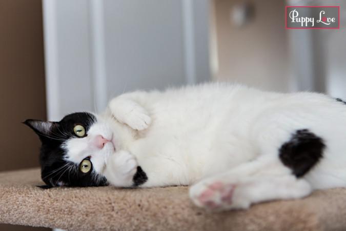 PAW Society calendar cat cute