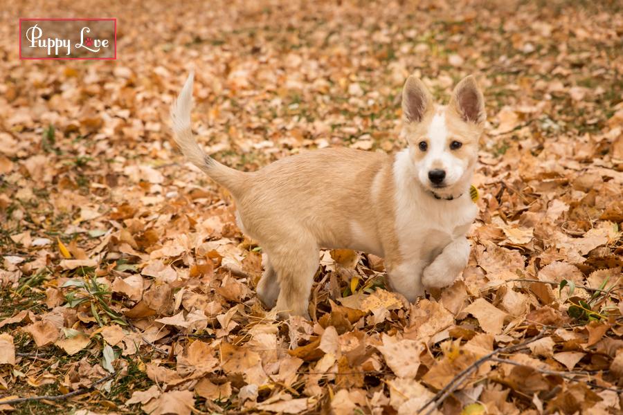 Dog playing in leaves AARCS Lethbridge
