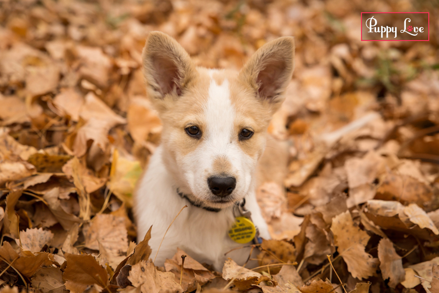 puppy in leaves in Lethbridge