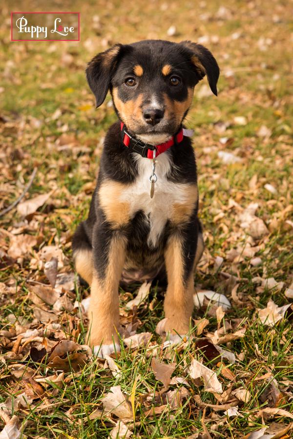AARCS cute puppy autumn