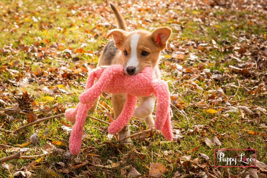 Happy puppy in leaves AARCS Lethbridge
