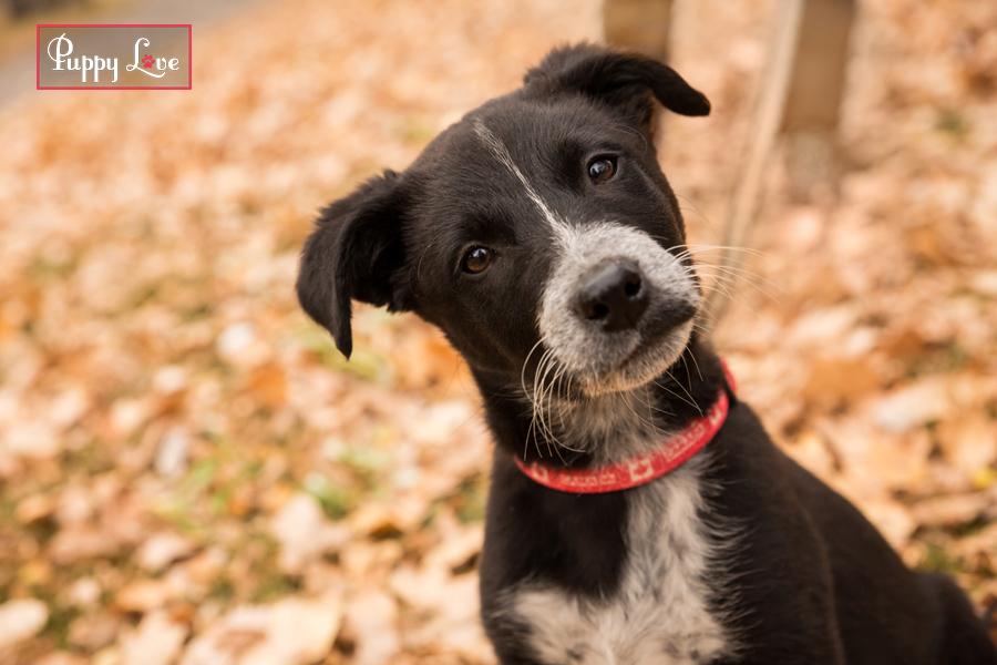 Curious puppy in Lethbridge AARCS