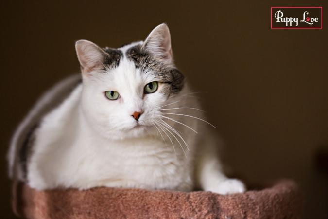 PAW Society Calendar cat photo
