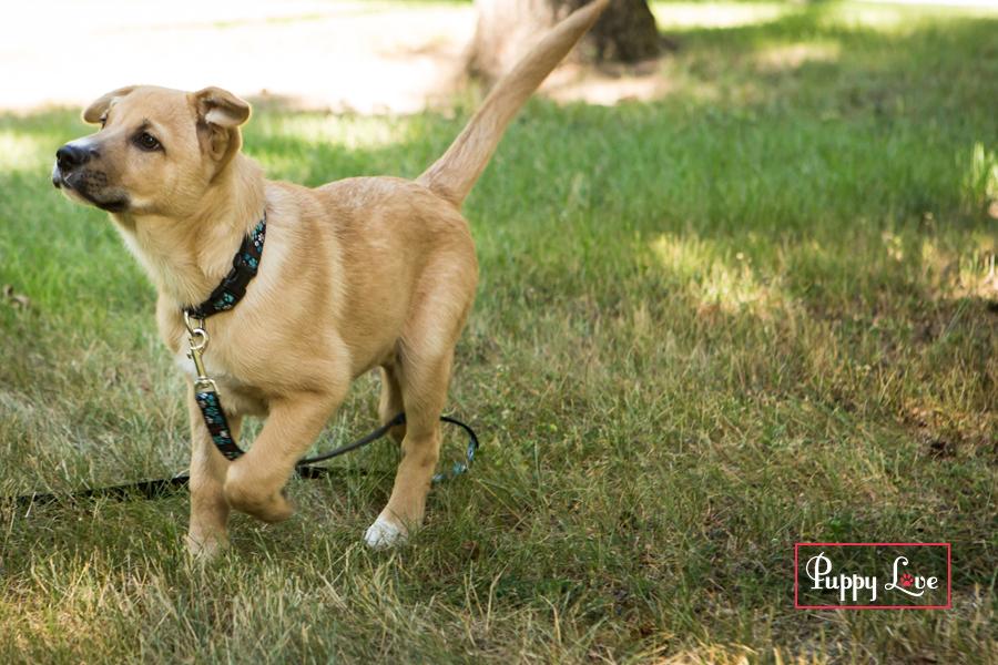 Dog running AARCS Lethbridge