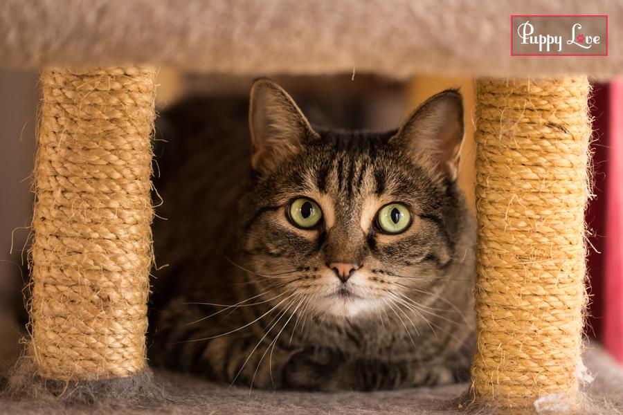 Fun Lethbridge PAW Society cat