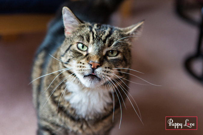 PAW Society Calendar cat