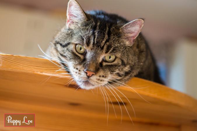 Lethbridge PAW Society cute cat